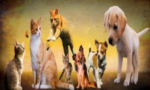 bien choisir assurance pour chiens et chats