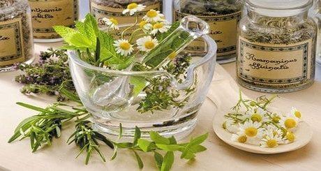 plantes médicinales pour maigrir