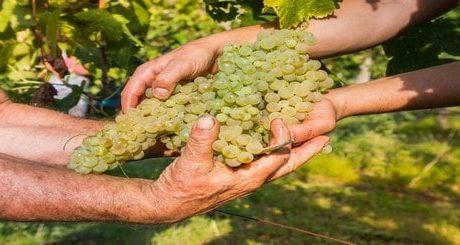 Fabrication du vin