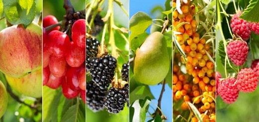arbres fruitiers dans mon jardin