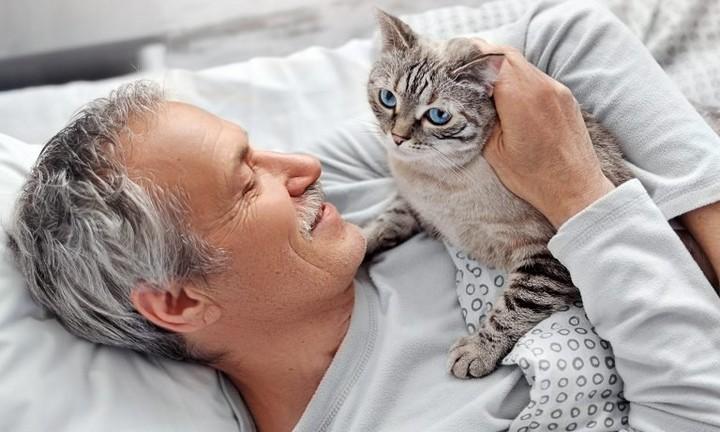 posséder un chat