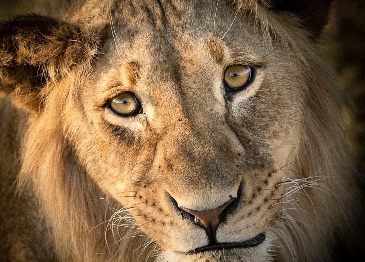 safari photographique en Afrique